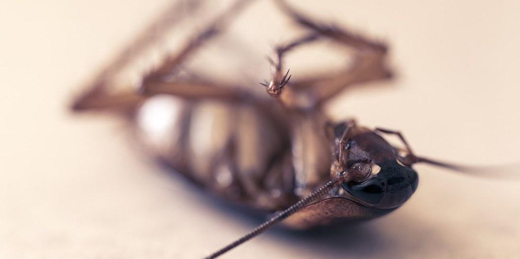 kakkerlak ongedierte in huis